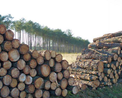Gascogne est un groupe, intégré dans la filière bois – papier – emballage